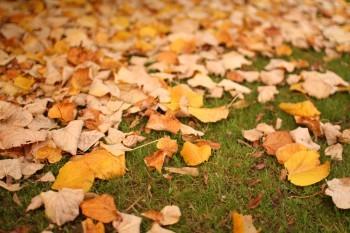 Halloween leaves in Ireland
