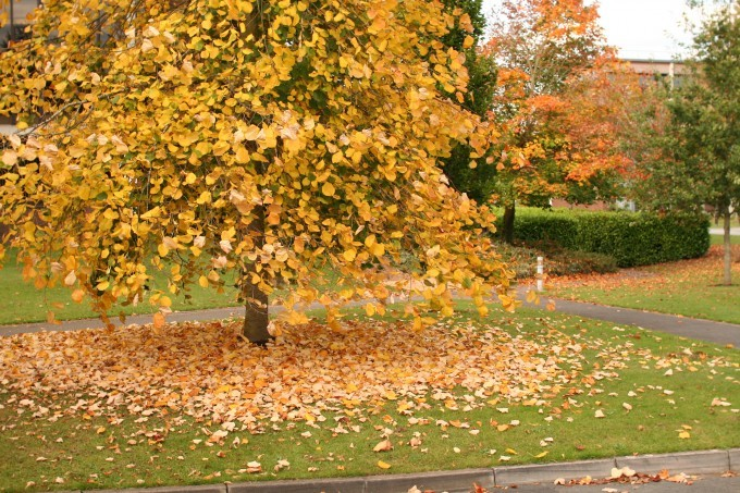 Samhain - Halloween leaves