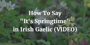 How To Say - It's Springtime in Irish Gaelic (VIDEO) article
