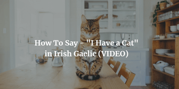 How To Say - I Have a Cat in Irish Gaelic (VIDEO)