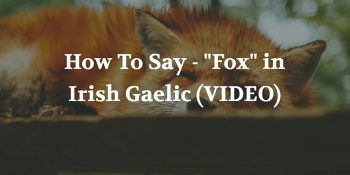 "How To Say - ""Fox"" in Irish Gaelic (VIDEO)"