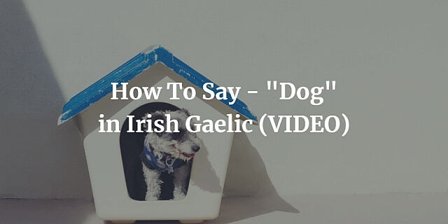 How To Say - Dog in Irish Gaelic (VIDEO)
